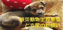 被災動物里親募集と支援サイト